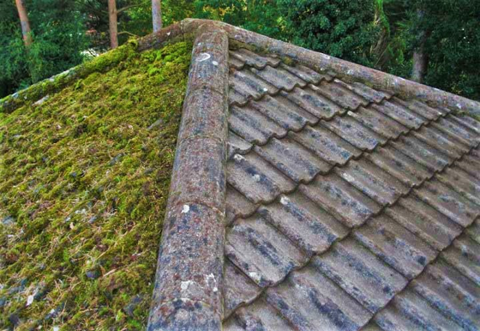 Roof Moss Removal Near Me Bellevue