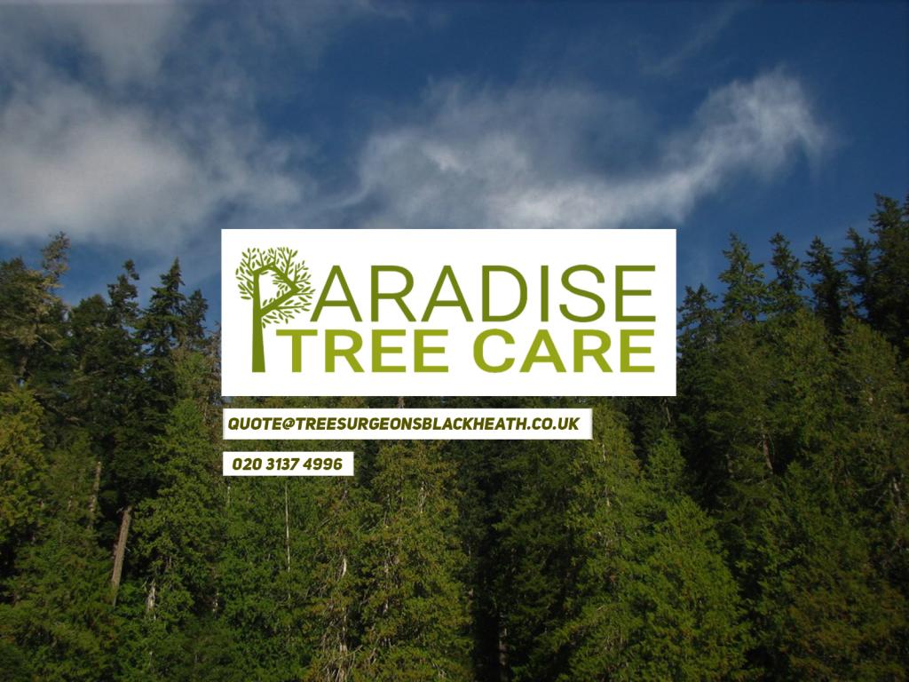 Paradise Tree Surgeons and Landscaping - Blackheath & Greenwich